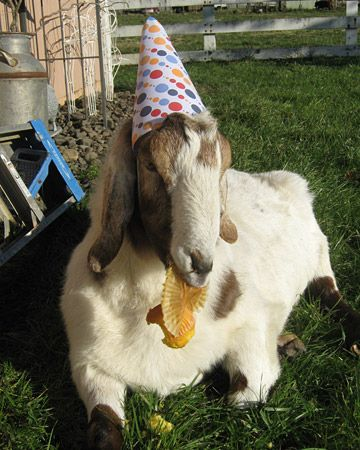 animals wearing birthday hats - photo #13