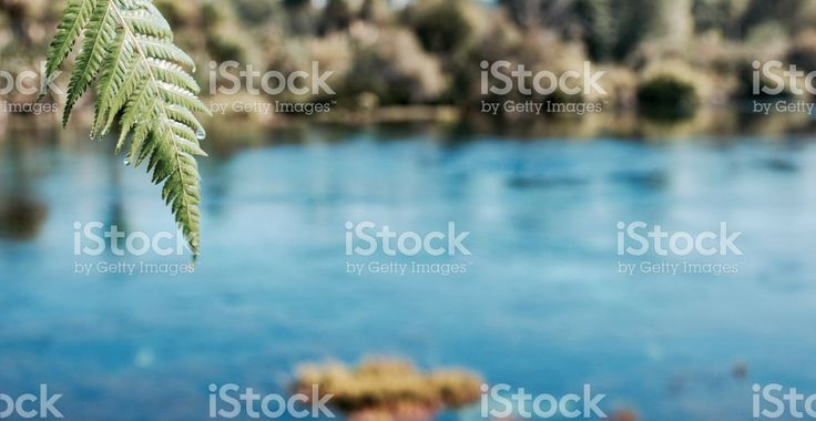 Pure Fresh Water Spring royalty-free stock photo