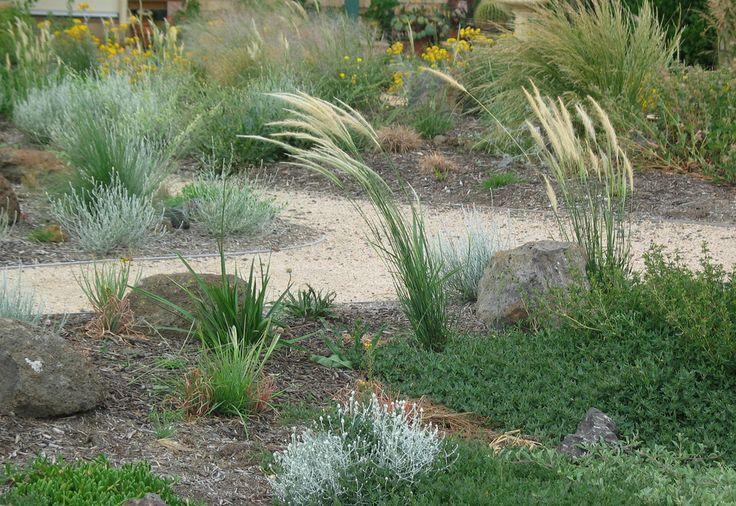 Native tussock grass (Dichelachne crinita)