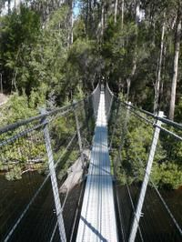 Huon Valley and Tahune Forest Airwalk Tour from Hobart #huonvalley #airwalk