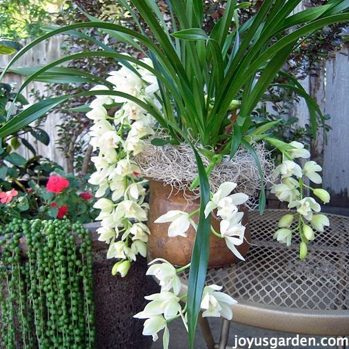 How To Care For & Propagate A String Of Pearls Plant | Joy Us GardenJoy Us Garden