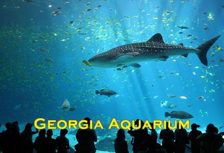 Must To See #Atlanta #TouristAttractions  #AtlantaAttractions #TouristAttractionsOfAtlanta #VisitAtlanta