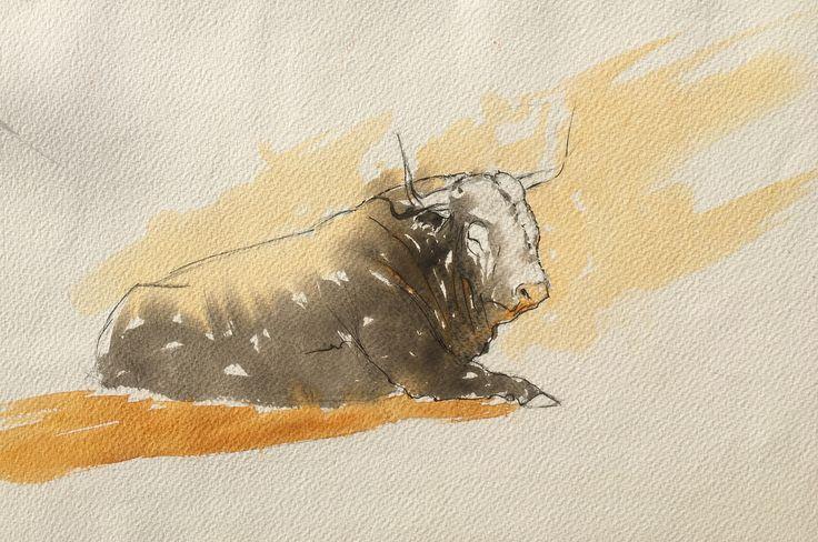 Bull. Watercolor, pen.