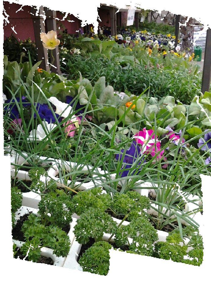 Seedlings by the loads