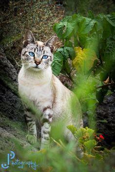 Ivygaze-pretty and optimistic shecat-likes frostpelt