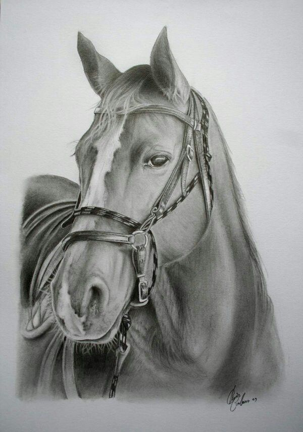 Realistic horse tattoo \ Drawing 3
