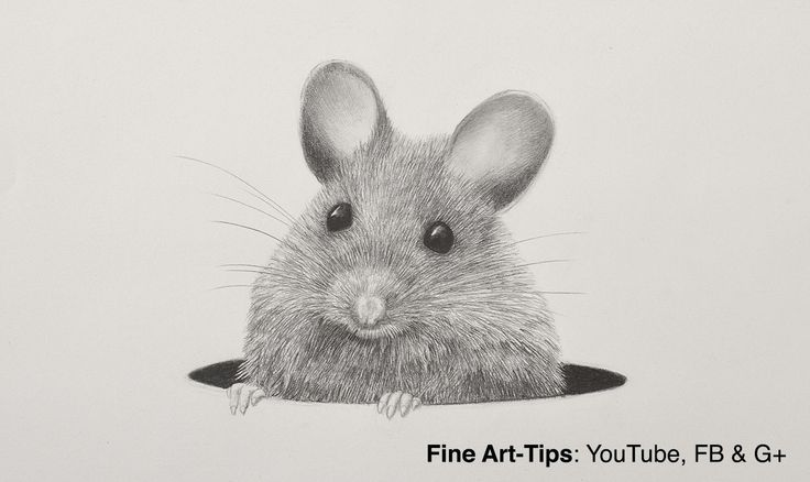 How to Draw a Mouse #drawing #mouse #art #pencil #rat