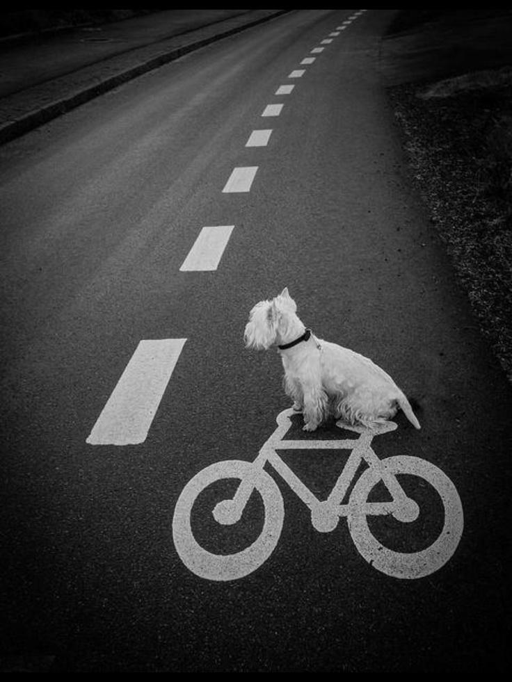 Doggie riding bike!