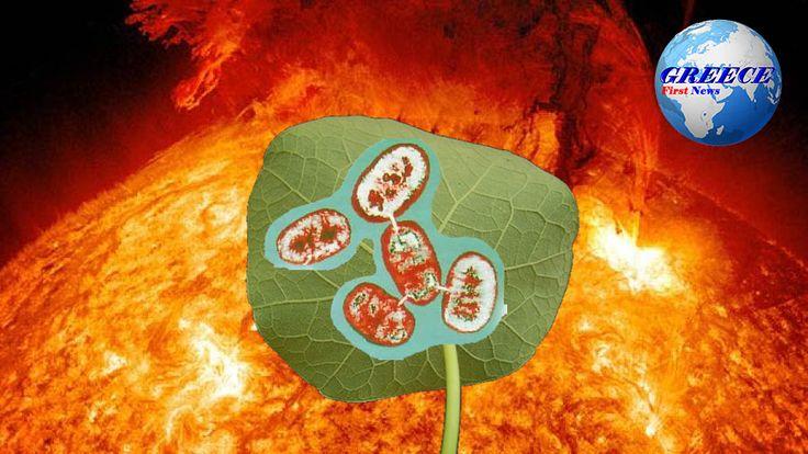 Greece First News: Ο ήλιος σε συνδυασμό με βακτήρια δημιουργεί υγρά κ...