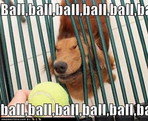 ball!Ball, Funny Dogs, Funny Face, Funny Humor, Funny Pictures, Pets, Funny Stuff, Funnydogs, Funny Animal