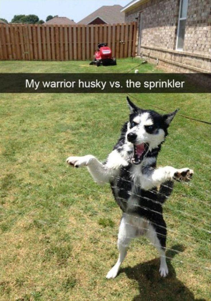 Funny Animal Memes Of The Day 24 Pics  – Witzige Tatsachen/Tiere und ihre Macken /shaming Bilder