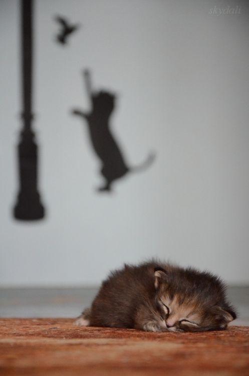 Kitten dreams,,, love