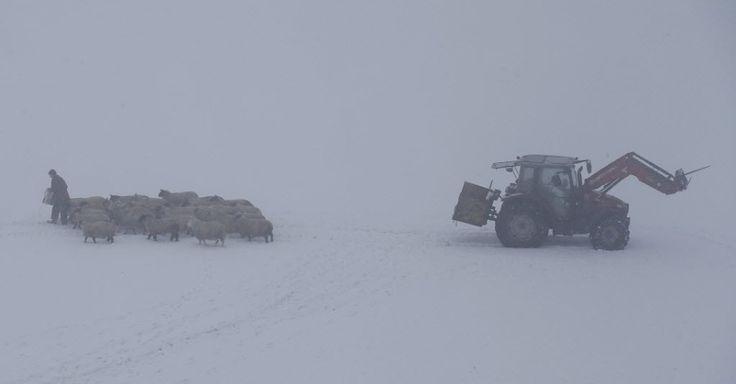 Um agricultor alimenta ovelhas em área coberta por neve em Newhaven, na Inglaterra.  Fotografia: Darren Staples/Reuters.