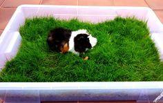 Manualidades para el hogar - fácil de hacer y práctico jardín con hierba para tu cobaya o conejo. Manualidades con fotos e instrucciones paso a paso.