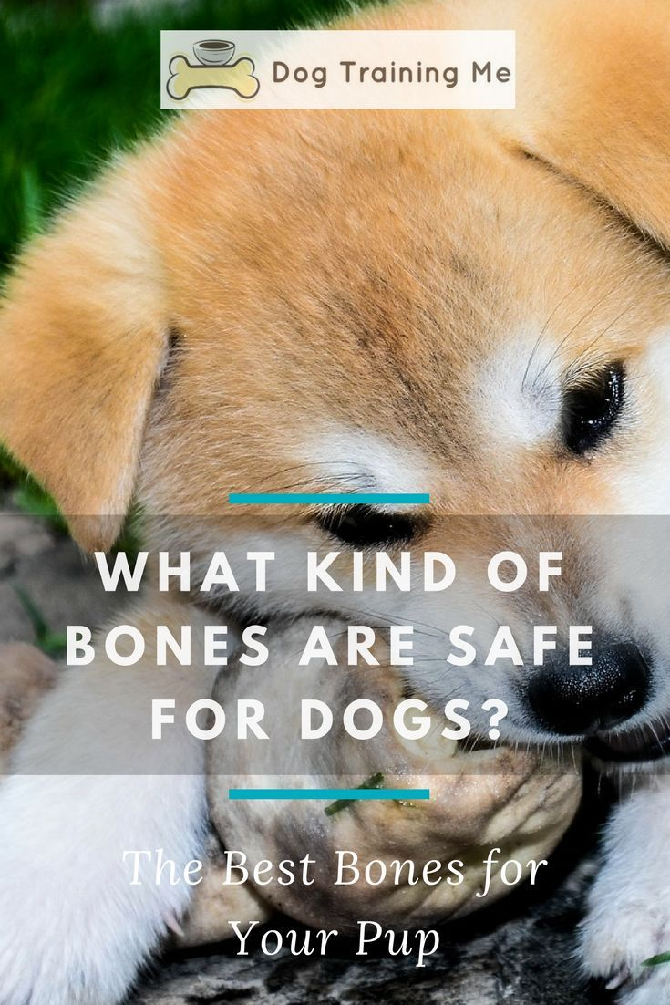 Are Bones Safe For Dogs Should You Be Feeding Your Dog Bones