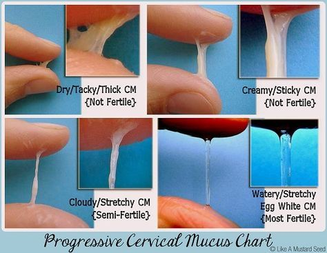 Progressive Cervical Mucus Chart- How to know when you are most fertile ?