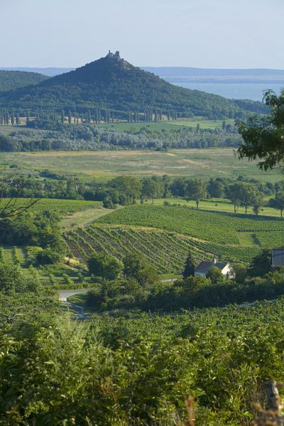 vineyards, Szigliget Peninsula, Lake Balaton, Hungary. Photo: Jon Arnold Images, Doug Pearson