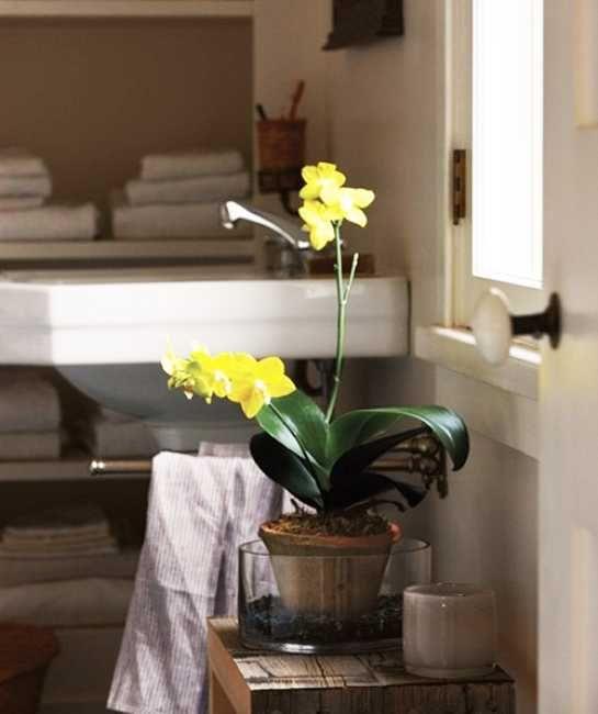 Flowers in the bathroom #CILserenity