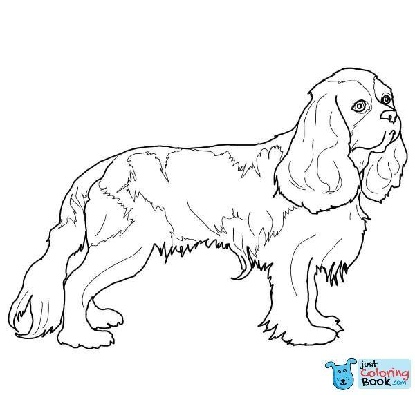 Free Download Cavalier King Charles Spaniel Coloring Pages Dog Coloring Page Cavalier King Charles Dog King Charles Dog
