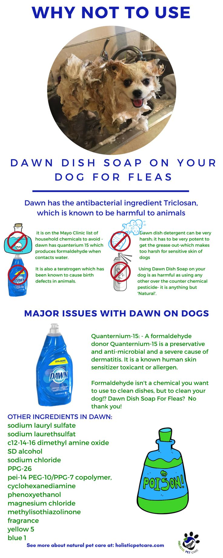 Do Not use Dawn Dish soap on your pet, please! Dawn dish