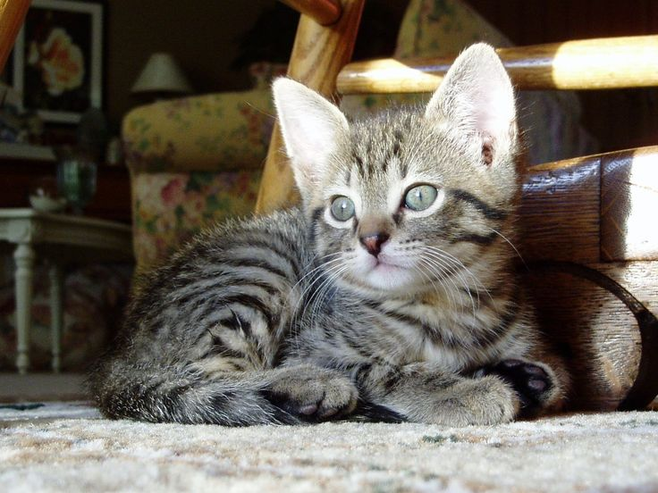 Another view of Olivia's sweet Tiger (aka Cleo, a kitten we loved dearly in real life!)