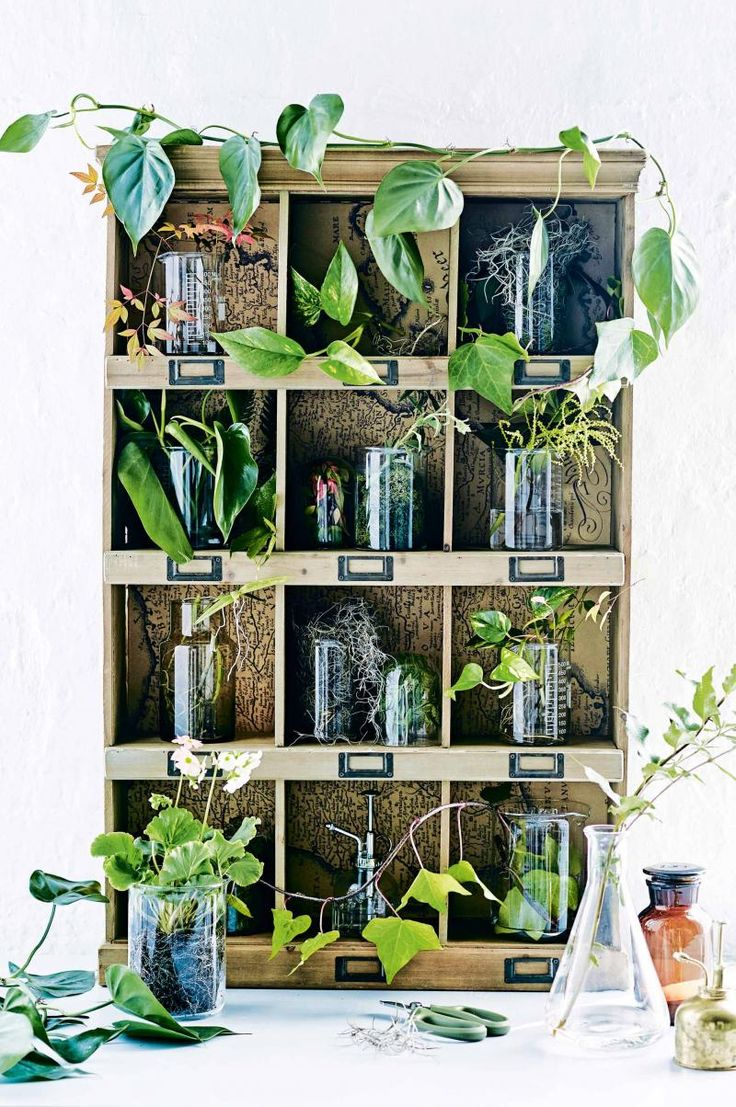 Plant cuttings cubby- i love this use of a vintage pidgeonholes, glass jars and plants