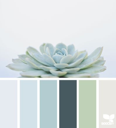 Permalink to Succulent hues (design seeds)
