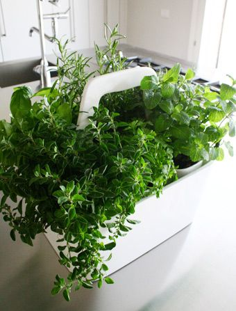 Transportable Herb Garden