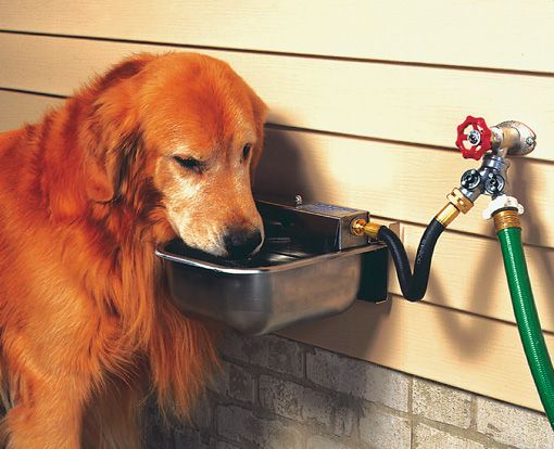 Automatic dog waterer for those hot days  they easily mount to the outside wall of the house or kennel pole and come with a garden hose adapter