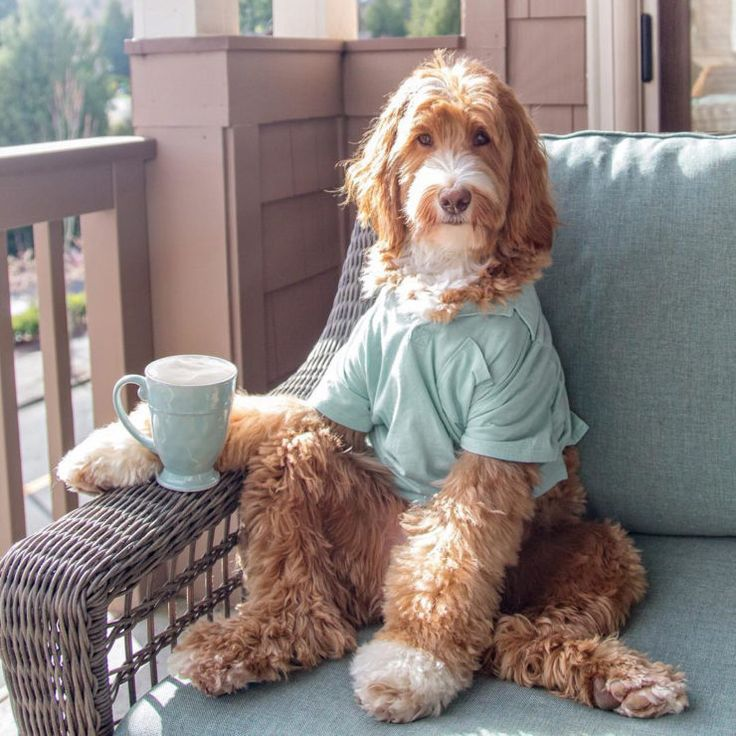 coffee on instagram @reagandoodle dog labradoodle interview almond milk sprudge