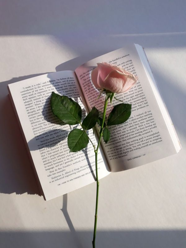 feelings #rose #pink #green #book #aesthetic Aesthetic photography pastel Book flowers Aesthetic roses