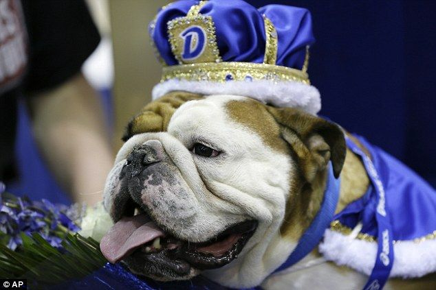 Pageant: The tongue-in-cheek beauty pageant, which featured 50 dogs, is the kickoff event ...