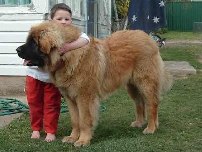 Big Gentle Dogs Coupon Code