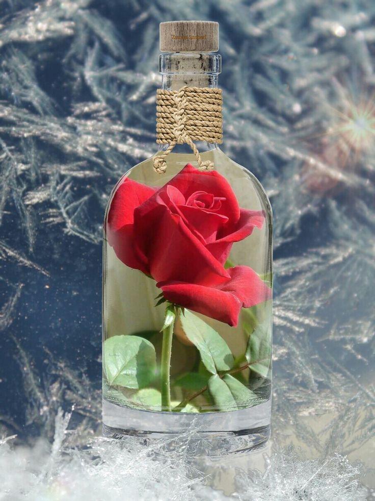 Rózsa télen..