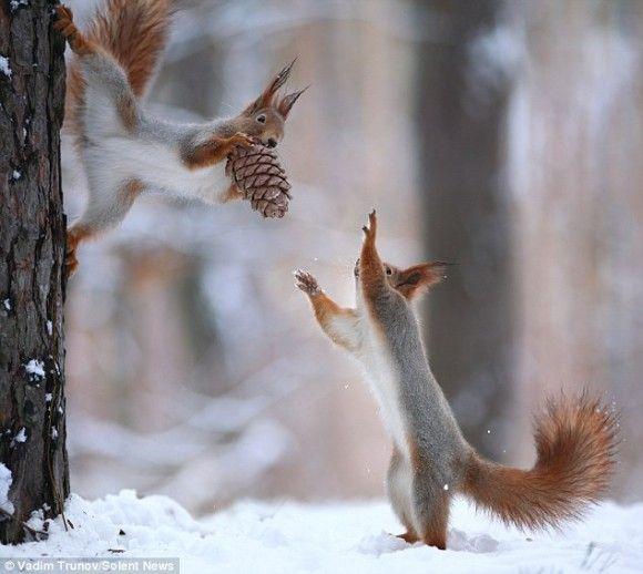 冬の森の中に広がるやさしい世界。やっと見つけた松ぼっくり、リスからリスへのプレゼント