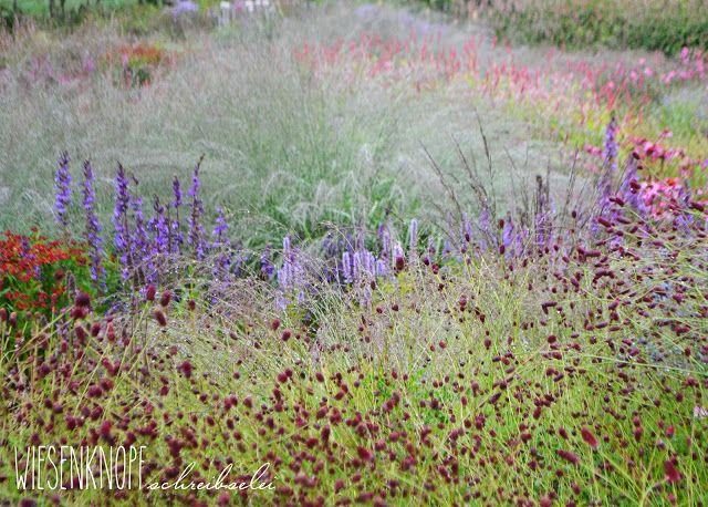 483 besten pflanzen bilder auf pinterest gartenpflanzen for Piet oudolf pflanzen