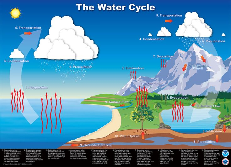 The-Water-Cycle.jpg (1024×742)