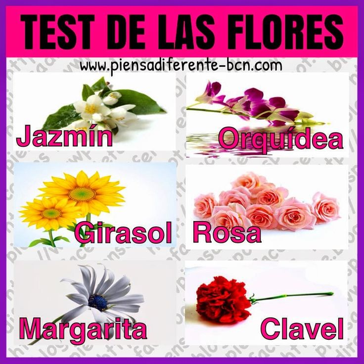 Test de las flores sab as que tu flor favorita refleja - Clase de flores y sus nombres ...