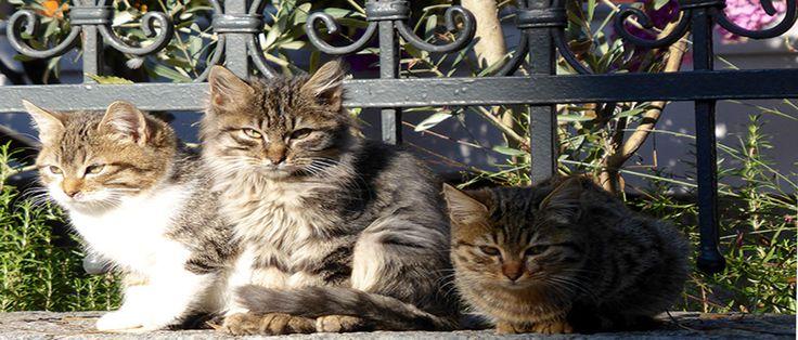 Home - Crescent City Cat Club