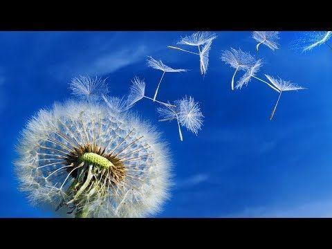 Música Positiva para purificar la casa - Musica Milagrosa con Energia Positiva - Parte/2 - YouTube
