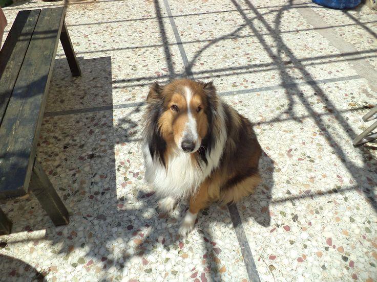 Hi! my name is Balou.