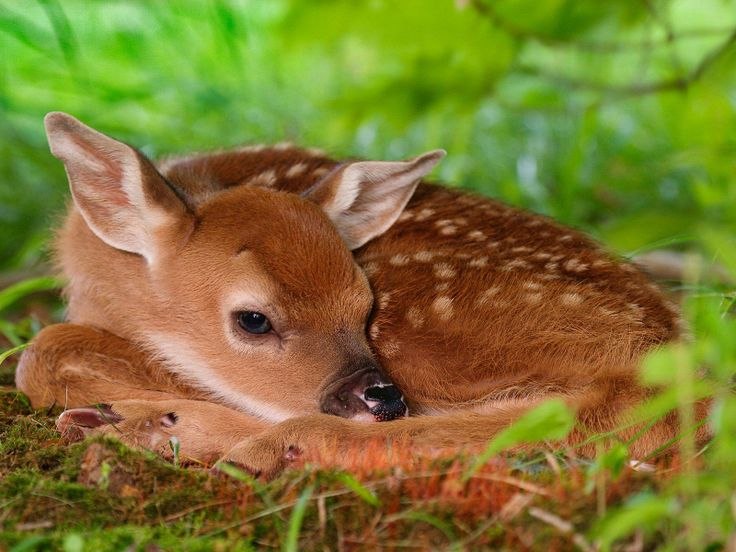 baby animals images | Baby Animals Wallpaper Photo high quality (1600x1200)