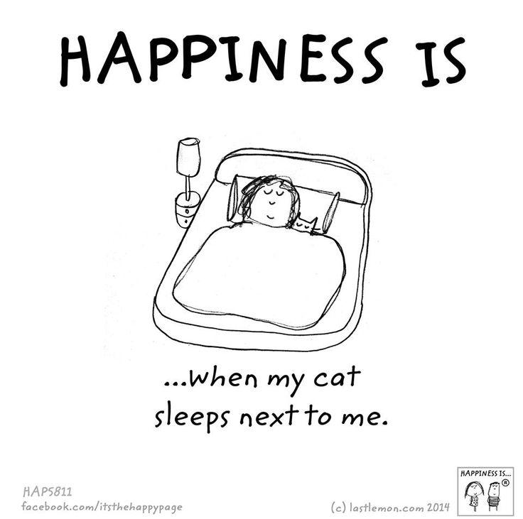 Felicidade é... quando meu gato dorme ao meu lado.