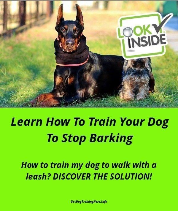 Basic Dog Training Instructions Dogtrainingvideo