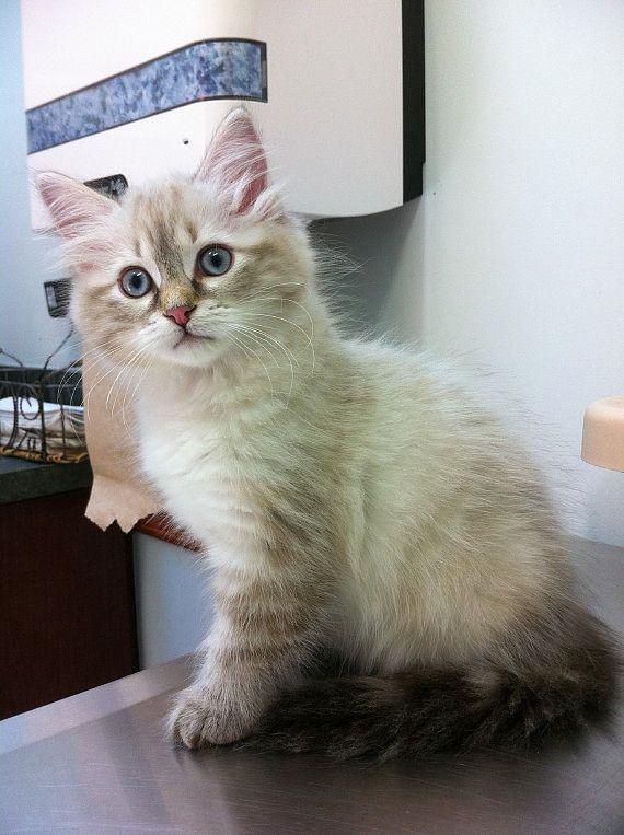 Best Cat Litter For Allergy Sufferers