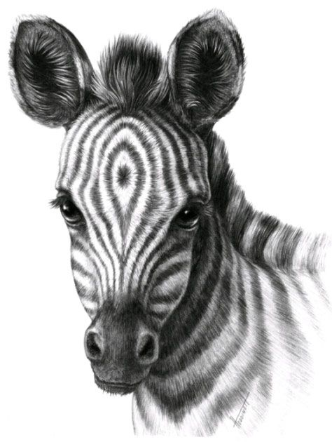 Как нарисовать шерсть карандашом, голова  зебры