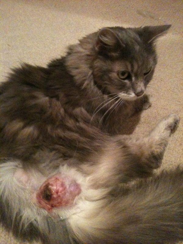 kittens placeholder