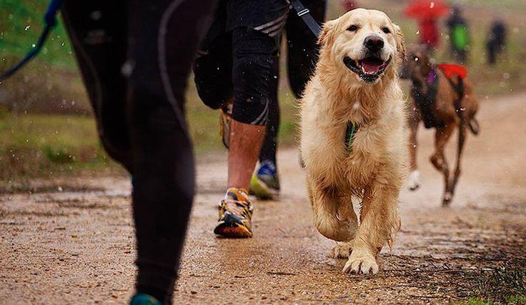¡Una carrera de perros!