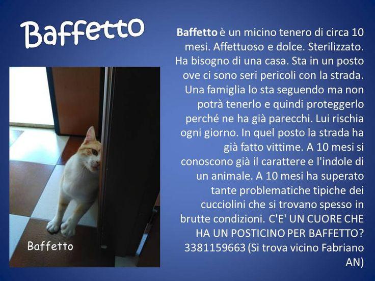 Gattino splendido si regala per seria adozione. 3381159663