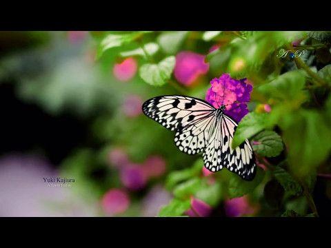 A Tender Feeling - YUKI KAJIURA - YouTube